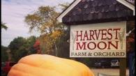 harvest-moon-orchard